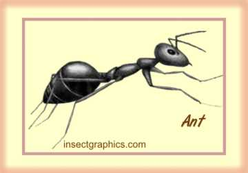 Featured Insect in the insectgraphics Store